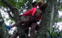 Round Ass Ebony Bangs On A Tree